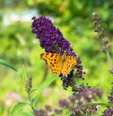 Schmetterling Nahaufnahme